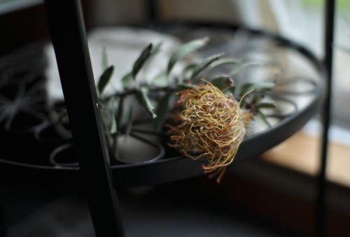乾いた植物
