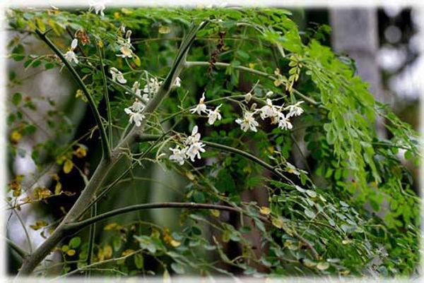 herbal life, herbal store, herbal essence