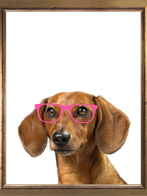 Dachshund Wearing Glasses