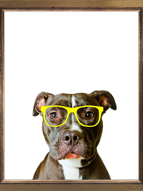 Pitbull Wearing Glasses