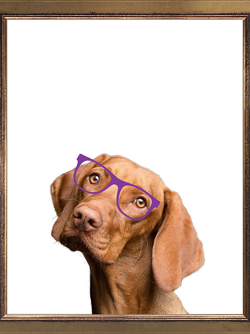 Vizsla Wearing Glasses