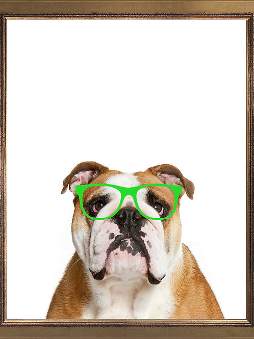 Bulldog Wearing Glasses