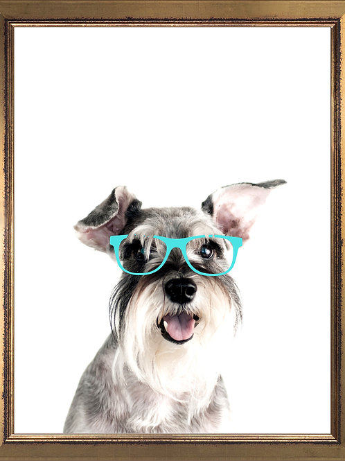 Schnauzer Wearing Glasses