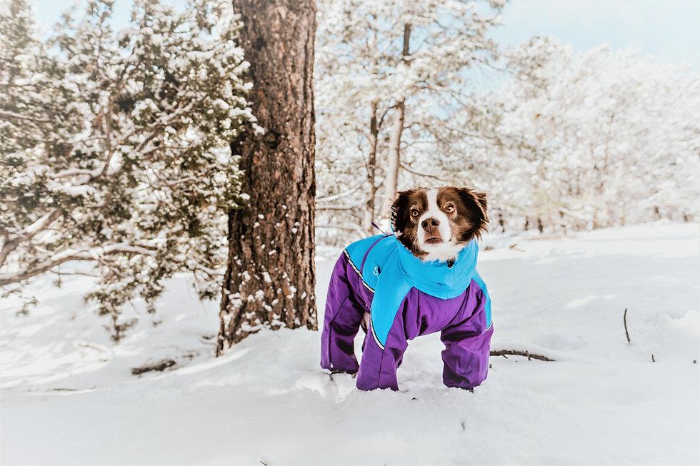 Custom Dog Coats-2.jpg