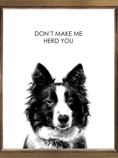 Border Collie Quote