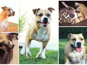 7 Reasons I Love My Dog