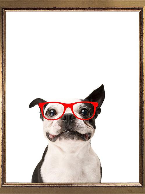 Boston Terrier Wearing Glasses