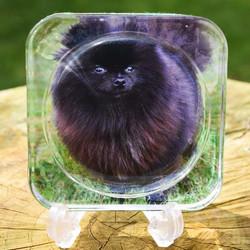 Pet Coasters £4.50