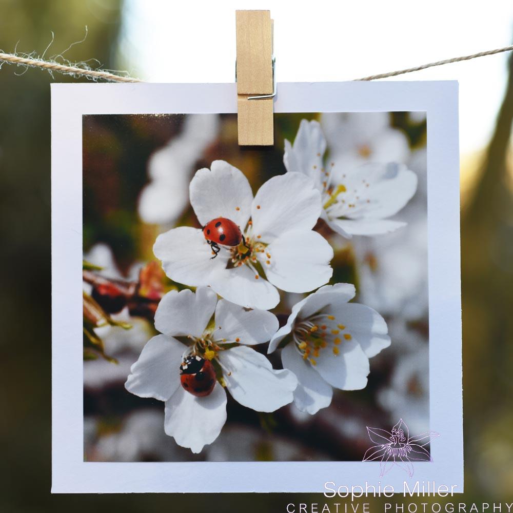 Ladybird Card £3.00
