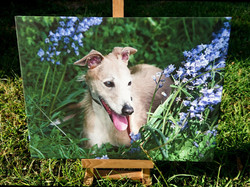 Canvas 16x12 £35