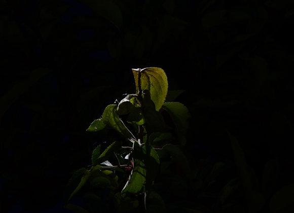 fine art print, tree, leaves, black