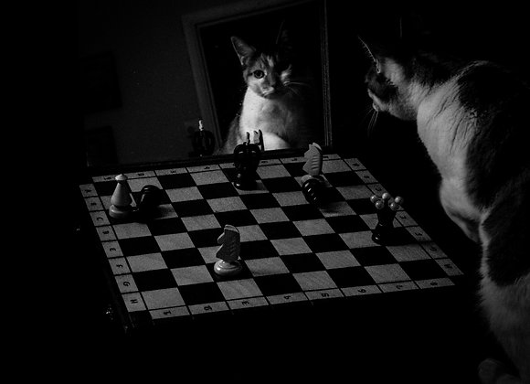 fine art print, art, cat, chess, surreal,