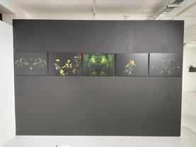 On display at the Platform graduate Award exhibition, at the Phoenix Artspace, Brighton. Aluminium prints from the Isolation Garden series.