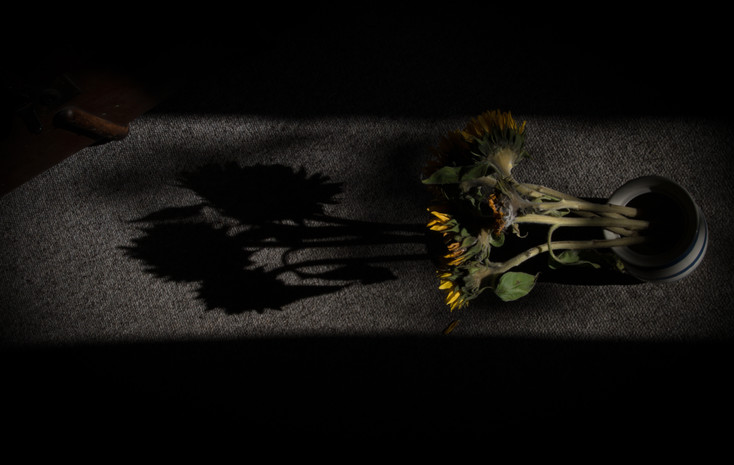Untitled #Memory of a sunflower3
