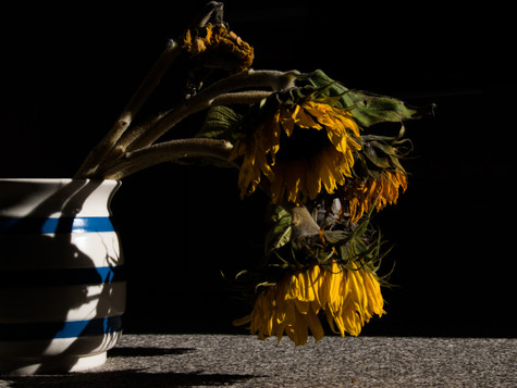 Untilted #Memory of a sunflower2