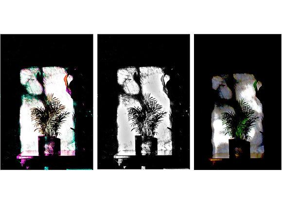 fine art print featuring a palm plant