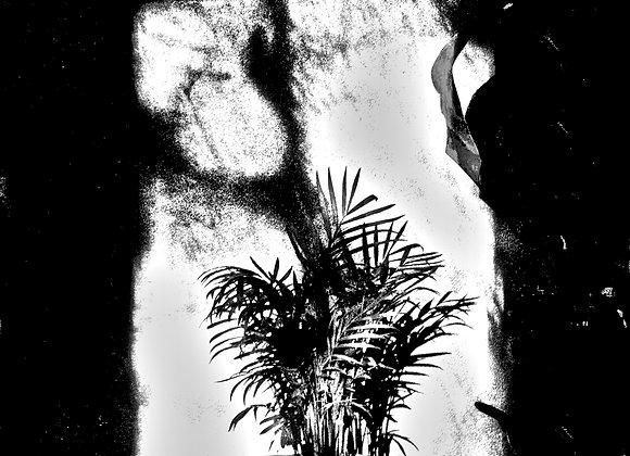 Untitled (Plant#3)