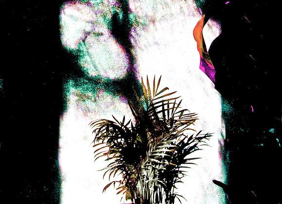 Untitled (Plant#2)