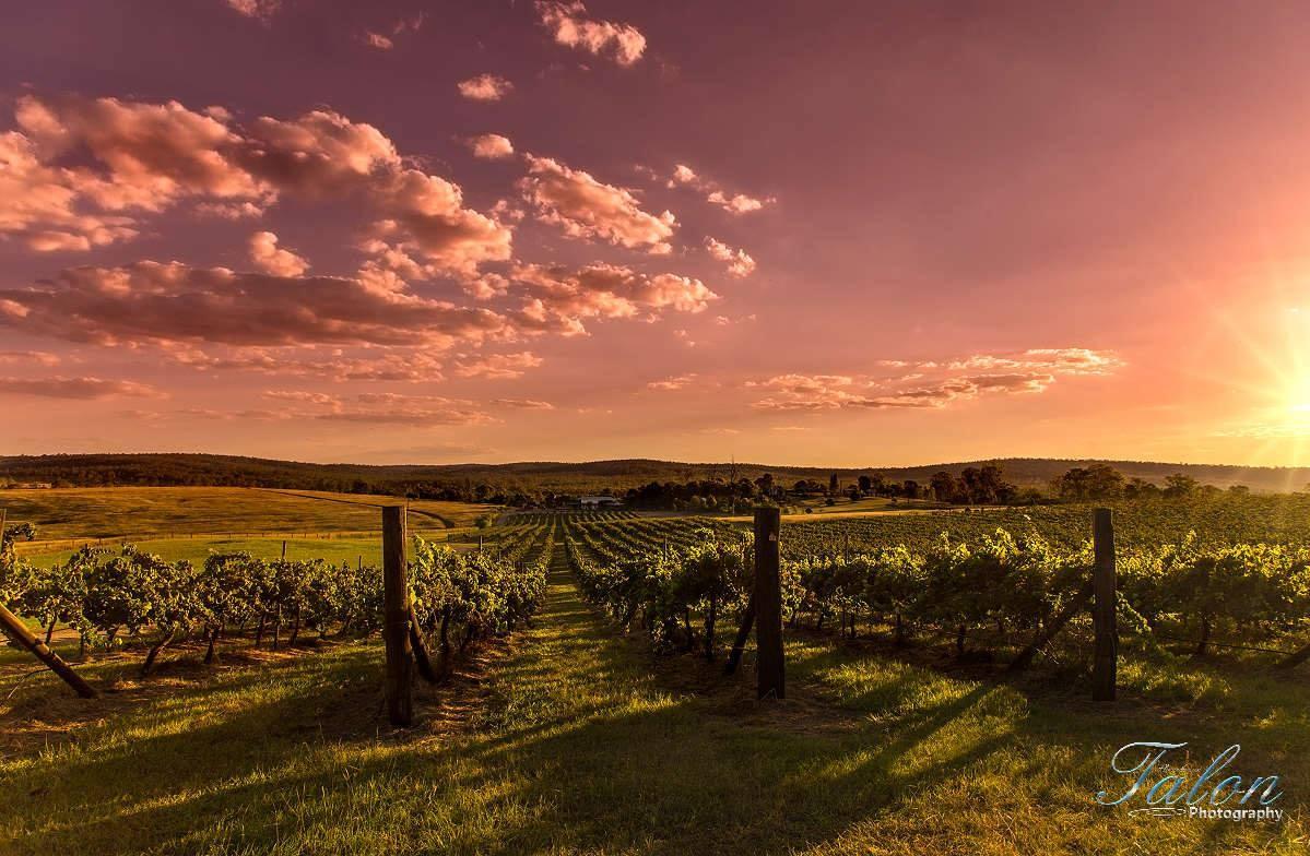 Dusty Hill Winery South Burnett 79