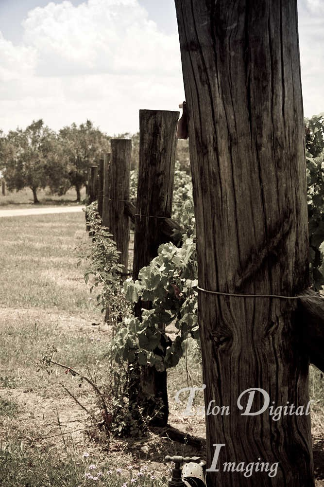 Dusty Hill Winery South Burnett 56