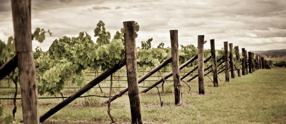 Dusty Hill Winery South Burnett a