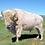Thumbnail: White Buffalo Hunt
