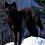 Thumbnail: Wolf Pick
