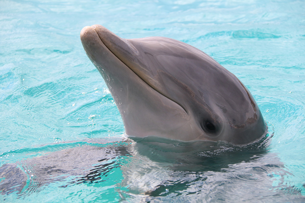 Curacao Dolphin Theray & Research Center