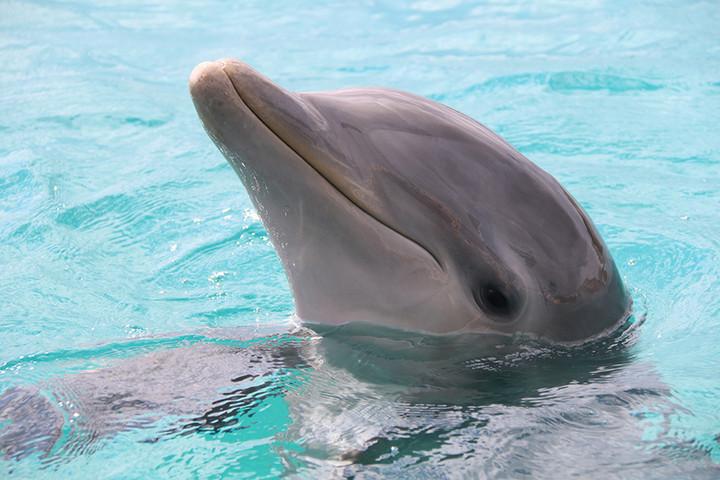 erste Delphintherapie