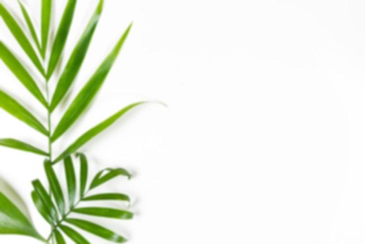 fond-minimaliste-feuilles-vertes-blanc_2