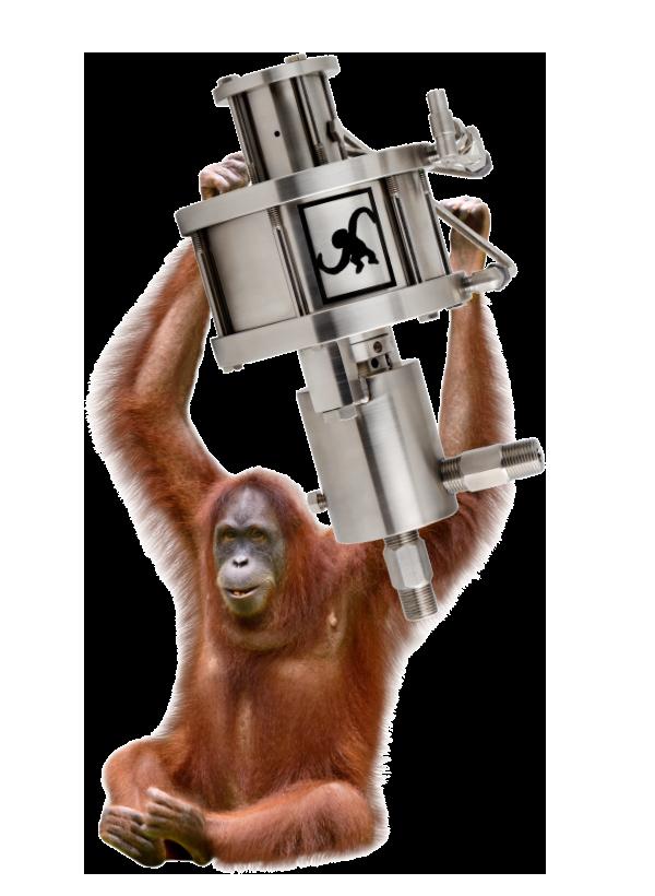 M50-Orangutan.png