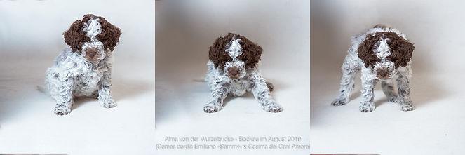 Alma von der Wurzelbucke, Bockau 2019-08