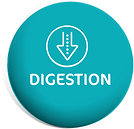DIGISTION LOGO.png