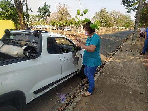 No Dia da Árvore, 300 mudas foram distribuídas no drive-thru de vacinação do Recinto