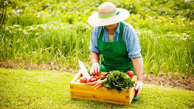 Abertas inscrições para laboratório de iniciativas sobre consumo de frutas, verduras e legumes