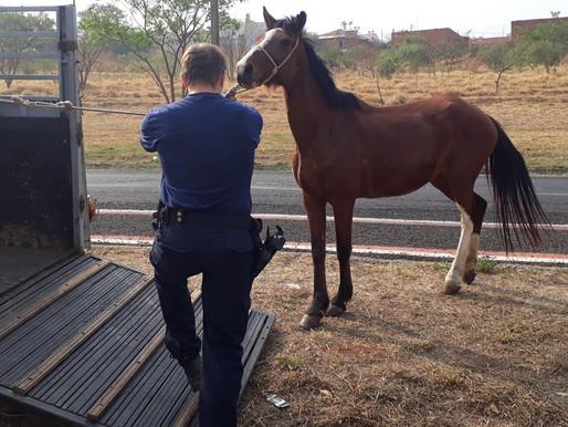 Quatro animais soltos em via pública são apreendidos pela Patrulha Ambiental de Catanduva