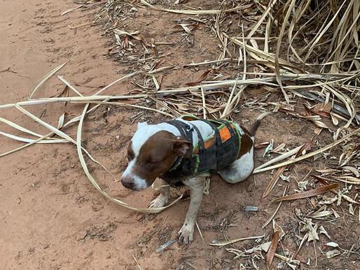 Homem é multado em R$ 3 mil por maus-tratos a cachorro no Jardim Paraíso