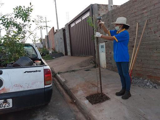 Projeto Arvorear atende mais 11 moradores que agendaram plantio gratuito