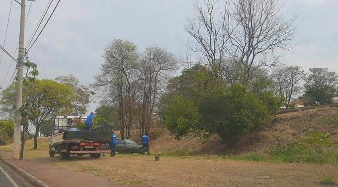 Prefeitura inicia projeto piloto de floresta urbana na Avenida Theodoro