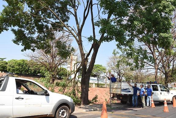 Prefeitura contabiliza 70 quedas de árvores e muro de escola cede com temporal