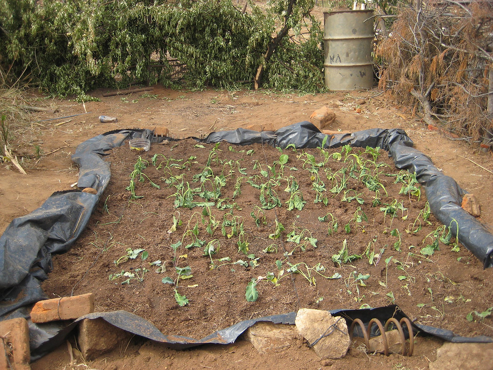 The beginnings of a wicking vegetable garden