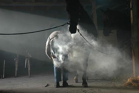 horse-2059504_960_720.jpg