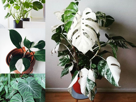 Feng Shui Plant Life When, Where and Why