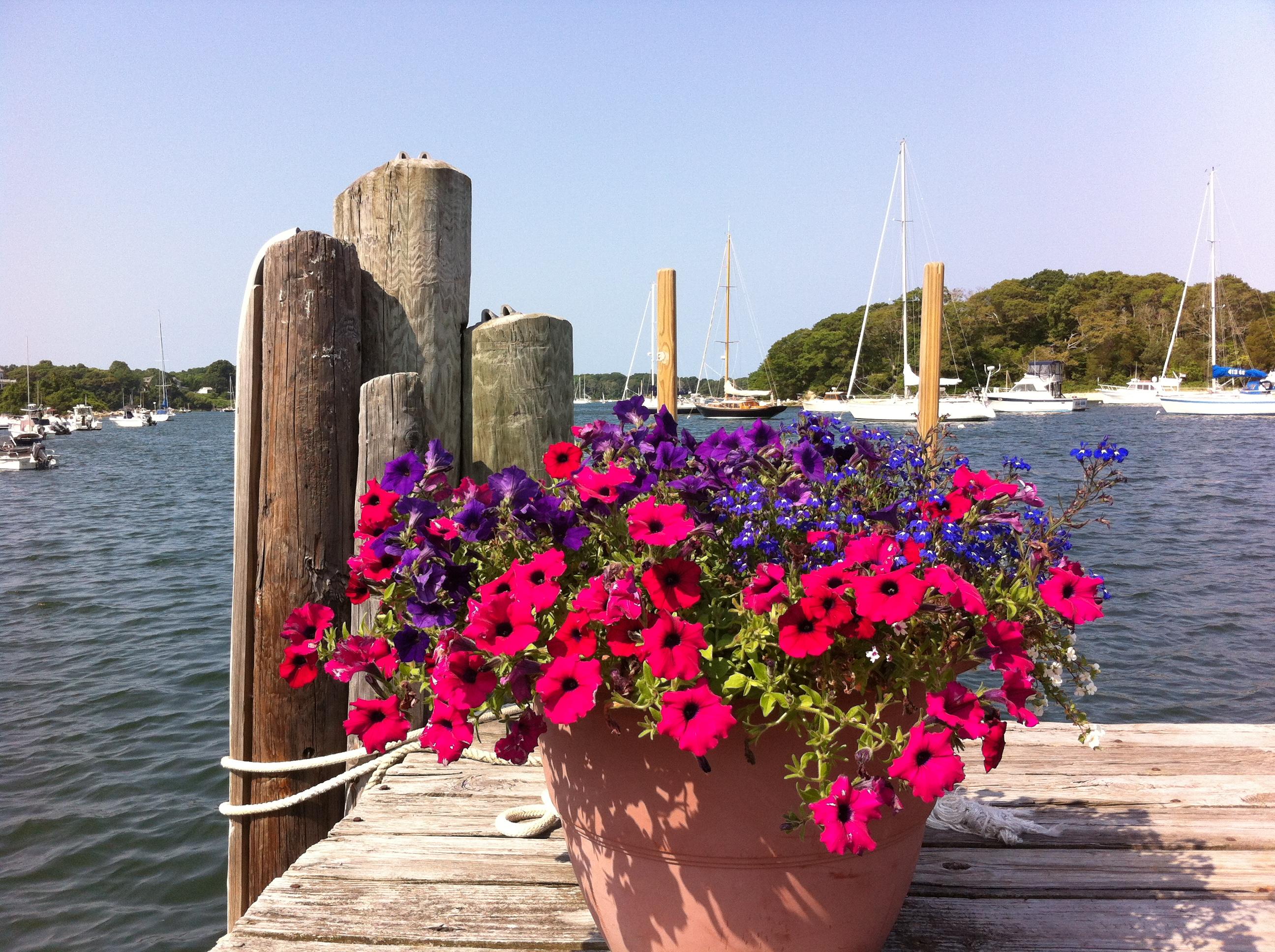 dock flowers 2014.JPG