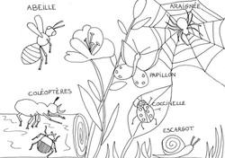 coloriage_insectes_du_jardin