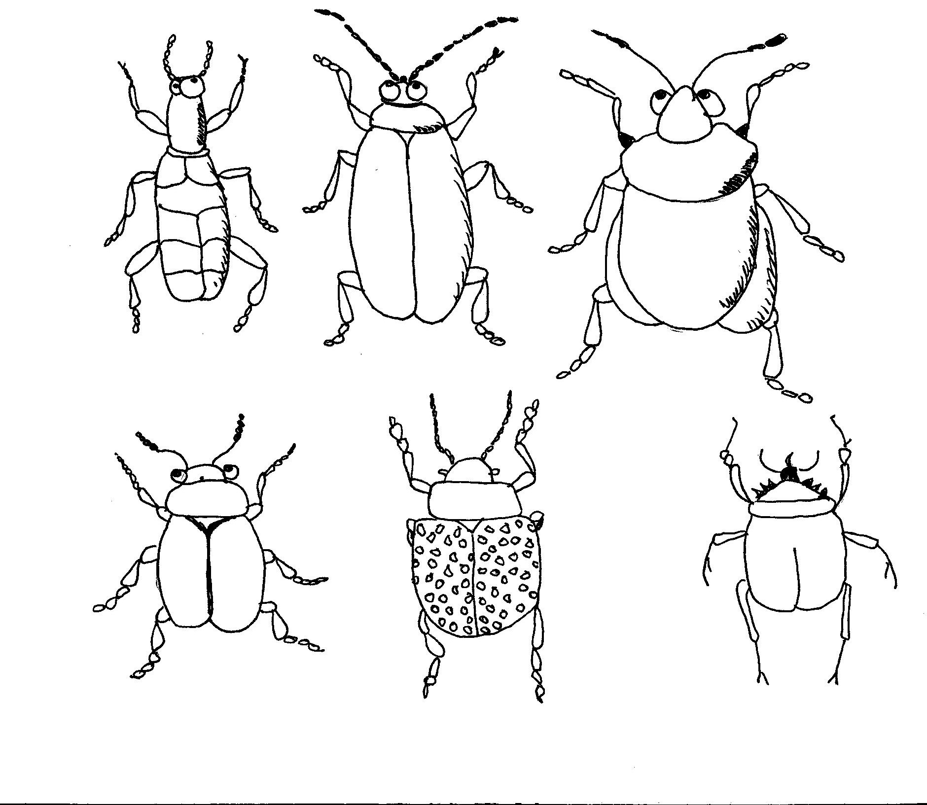 Coloriage_insectes