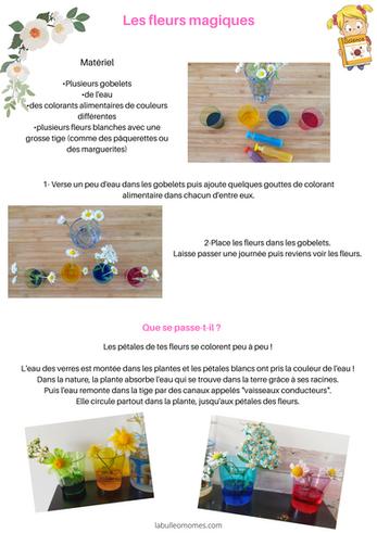 Les petits scientifiques : les fleurs qui changent de couleur