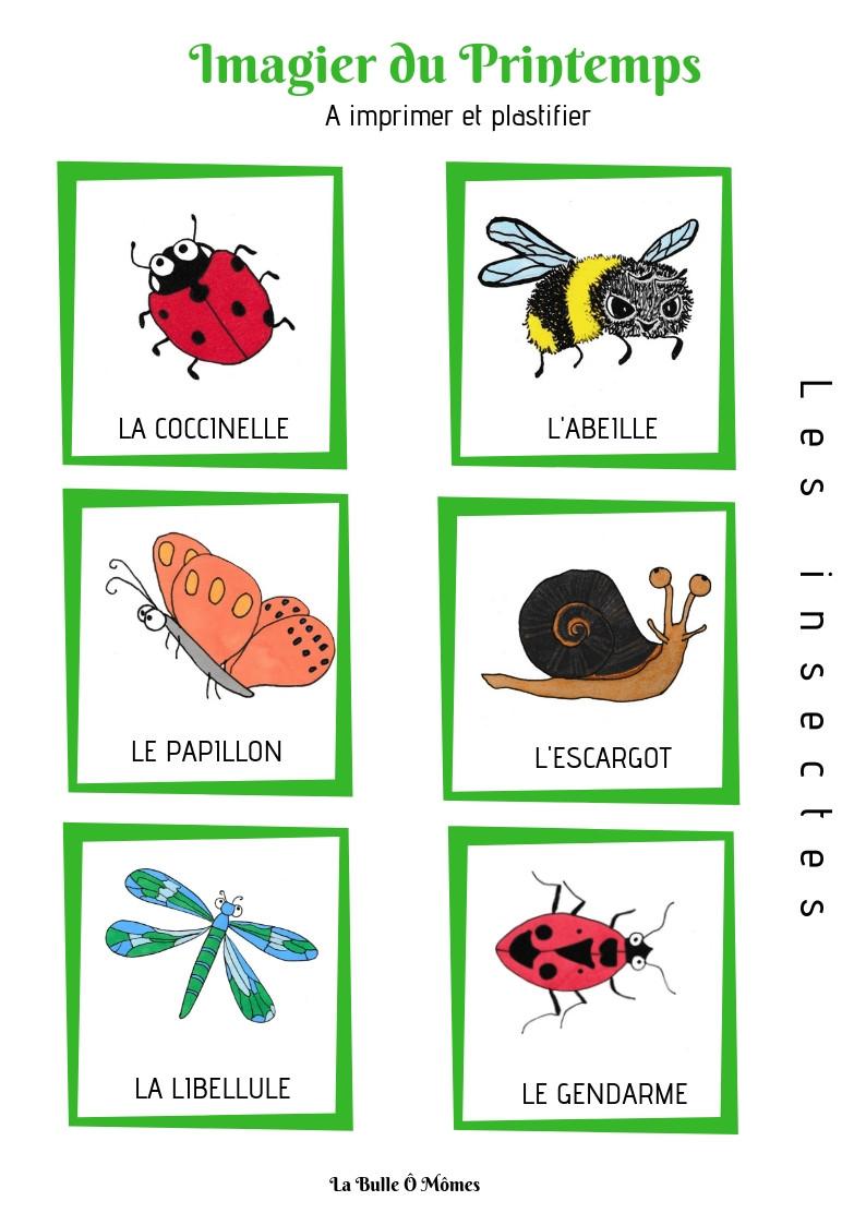 L'imagier du printemps-les insectes