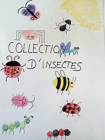 l'inventaire d'insectes