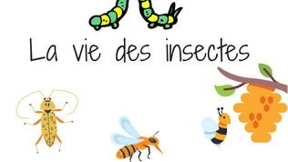 Tout sur les insectes